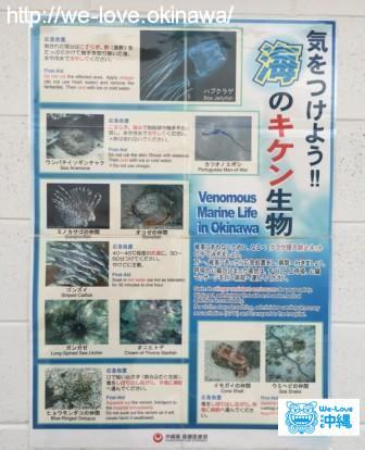 沖縄のビーチで注意するべき危険海洋生物12選