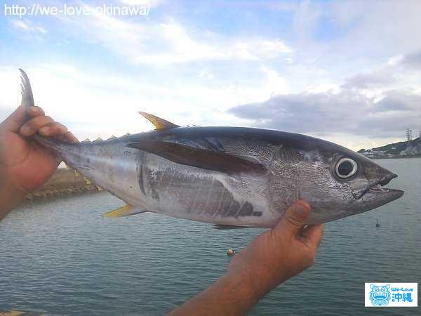 【沖縄釣り情報】釣りガールの私が教える、沖縄釣りのススメ(防波堤や漁港編)