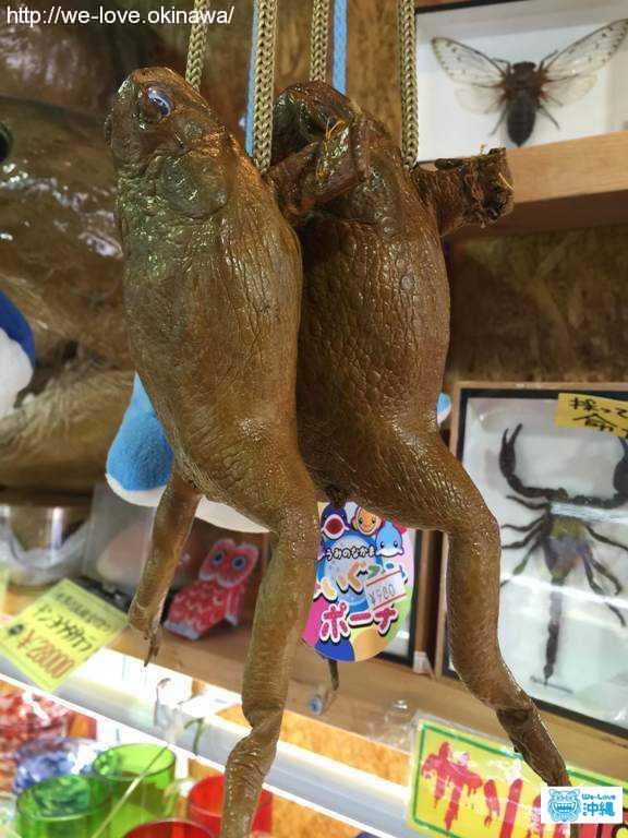 沖縄土産 カエル