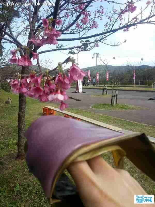 ムーチー花見2