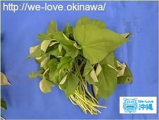 サツマイモ(紅イモ等)の生茎葉(カズラ)