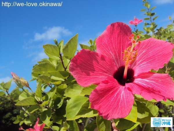 沖縄県 南部