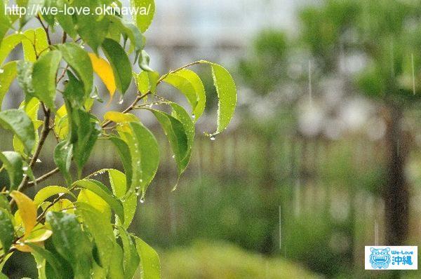 雨降り木々
