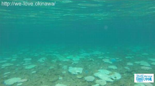 恩納村サンゴ白化現象