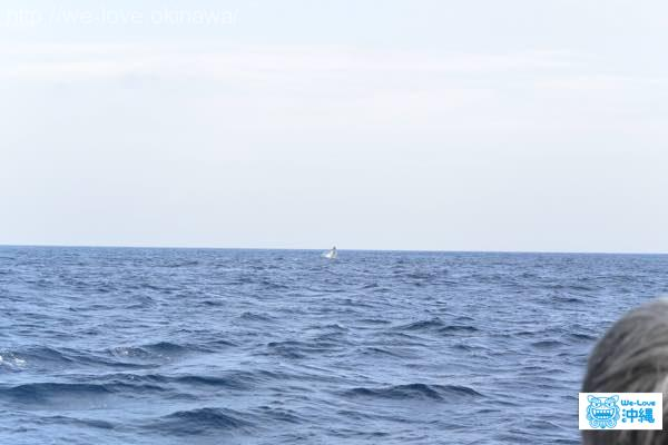 whalewatching-jump