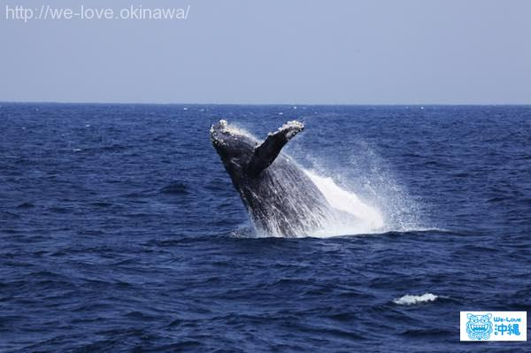 whalewatching1