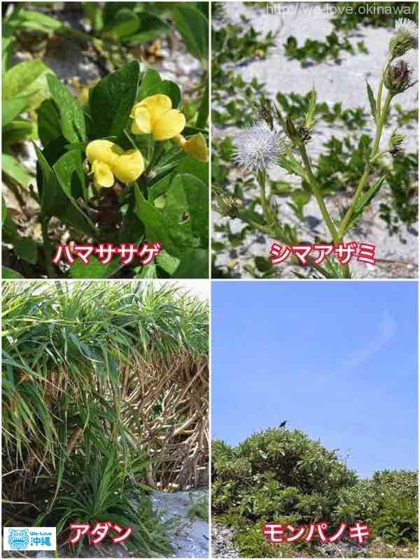 ナガンヌ島植物