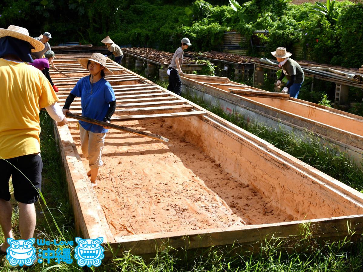 土はすべてきれいに取り出されバケツの中へ