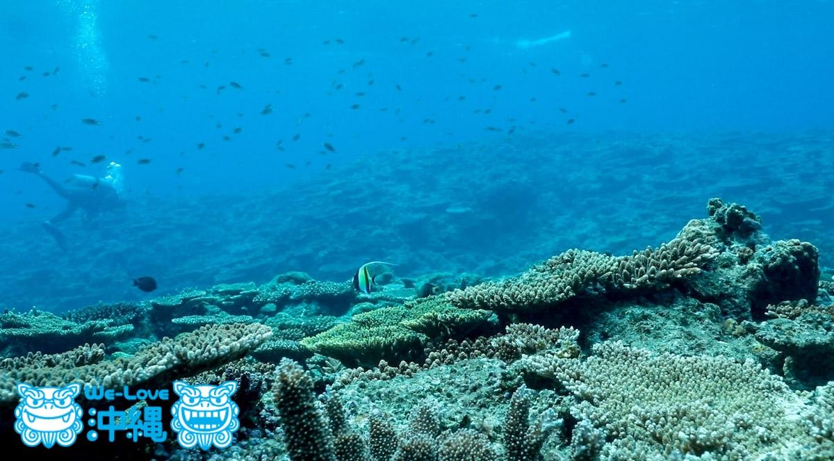 ウエンチのサンゴ礁