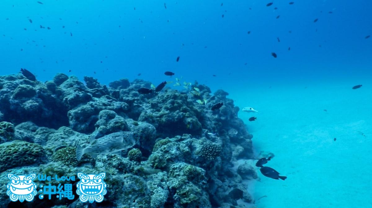 サンゴ礁と白い砂